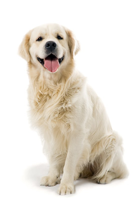 Be A Dog Sitter Dog Sitting Service Out U Go